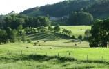 Bele siana w dolinie rzeki Szeszupy