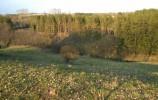 Rzeka Kozikówka płynie wzdłuż najdłuższego pagórka ozu turtulskiego