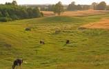 Wigierski PN - pola i łąki wsi Rosochaty Róg